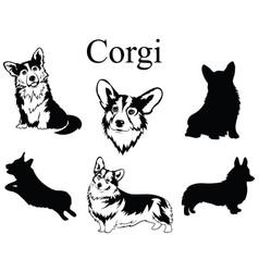 Set corgi collection pedigree dogs black vector