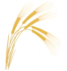 Wheat or rye grass vector