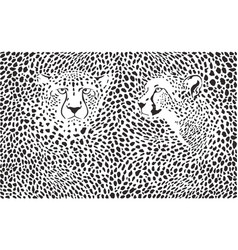 cheetahs background with heads vector image