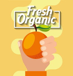 Hand holding fresh organic fruit orange vector