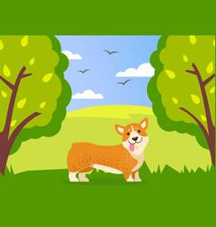 happy cute corgi dog is walking in green summer vector image