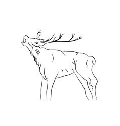 sketch of a deer vector image