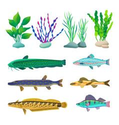 Various algae and marine creatures vector