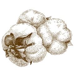 engraving cotton vector image