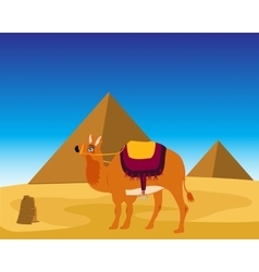 Camel and pyramids vector