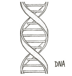 Gold dna dna symbol dna helix symbol gene icon vector