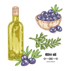 Hand drawn black olive branch and olive oil in vector