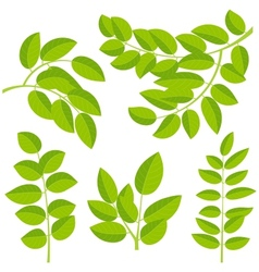 Leaves elements vector image vector image