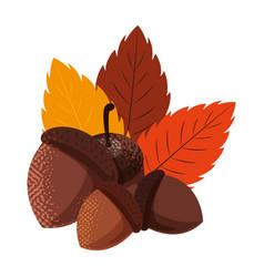 Acorns foliage happy autumn season design vector