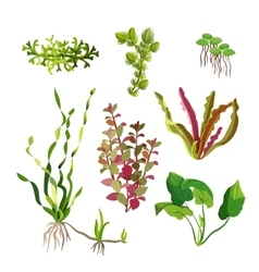 Aquarium plants set Cartoon underwater algae vector