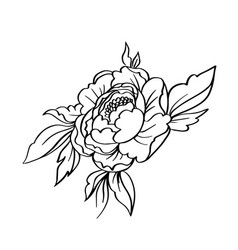 black white contour simple sketch peony vector image