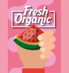 hand holding fresh organic fruit watermelon vector image