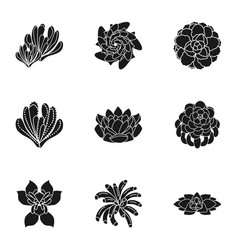 Succulent plant icon set simple style vector