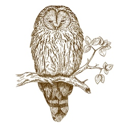 etching owl vector image vector image