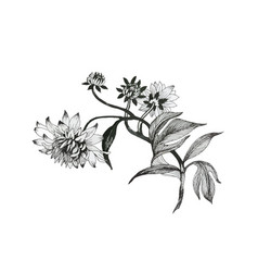 hand drawn monochrome flowers isolated on white vector image vector image