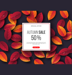 autumn sale banner with 3d leaves and water drops vector image