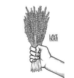 Graphic hand with lavender bouquet vector