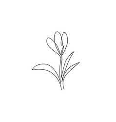 one single line drawing beauty fresh croci for vector image