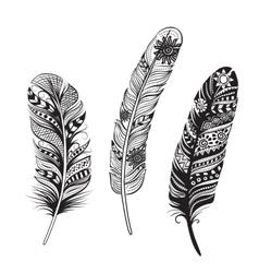 Feathers birds vector