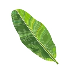 Full fresh leaf of banana palm tree vector