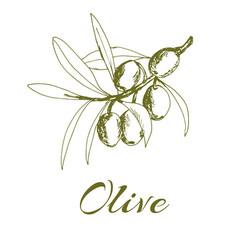 hand-drawn logo of olives vector image
