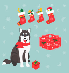 Holiday husky christmas and new year background vector