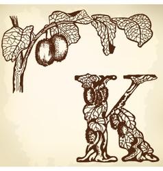 Kiwi berries and leaves vector image