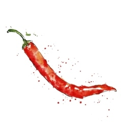 Watercolor red chili pepper vector