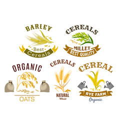 Cereal icon set with wheat rye oat and millet vector