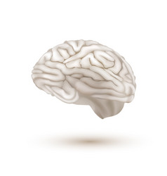 3d white flying human brain with shadow vector image