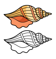cartoon sea shell isolated on white vector image