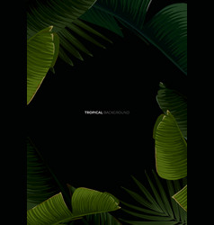 dark tropical summer design with banana palm vector image