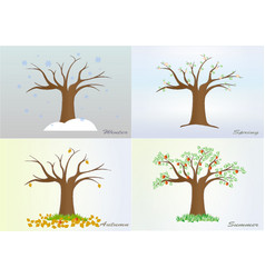 four seasons tree winter spring summer autumn vector image