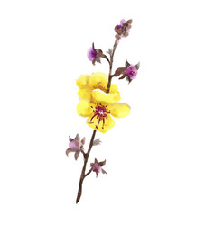 Hand drawn yellow and purple flowers isolated on vector