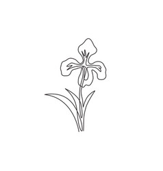 one single line drawing beauty fresh perennial vector image