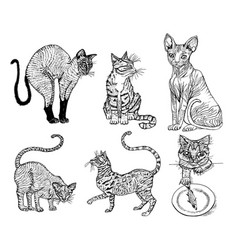 set of pedigree cats kittens collection icons vector image