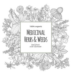 square banner for text with medicinal flowers and vector image