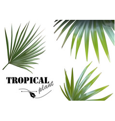 tropical palm leaves vector image