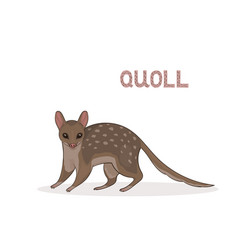 a cartoon cute quoll isolated on a white vector image