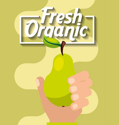 hand holding fresh organic fruit pear vector image