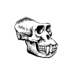 monkey skull sketch vector image