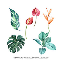 Set various isolated foliage watercolor vector