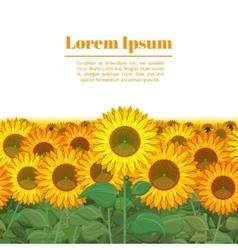 Sunflower field Row of sunflowers vector image