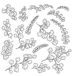 doodle fern vector image vector image