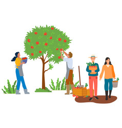 Autumn season picking apples and carrots vector