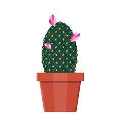 cactus plant in flower pot decoration home plant vector image