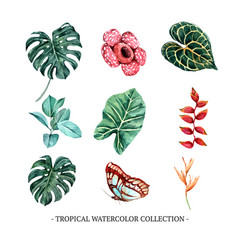 Creative isolated watercolor foliage floral vector