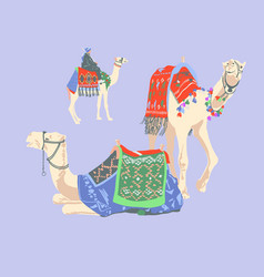 Egyptian camel decorated with bright carpets and vector