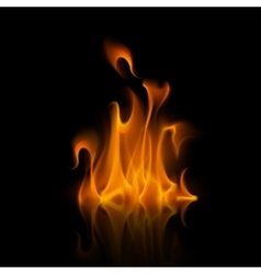 Orange Fire Flame Bonfire Isolated on Background vector image