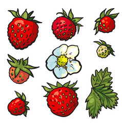 Sketch wild strawberry set flowers with leaves vector